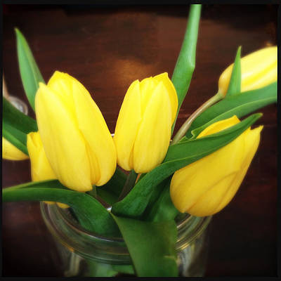 Tulips Photograph - Soft Yellow Tulips by Matthias Hauser