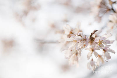 Softly Blossom Print by Anne Gilbert