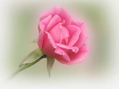 Softly Pink Print by Sandy Keeton