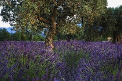 Olive Photograph - Soiree Provencal by Joachim G Pinkawa