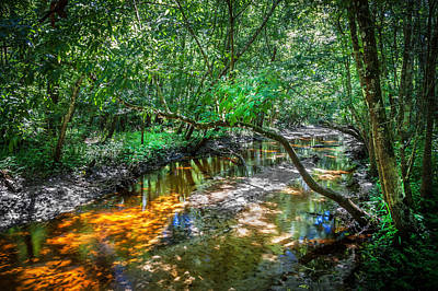 Cypress Swamp Photograph - Soldiers Creek Seminole County Florida   by Rich Franco