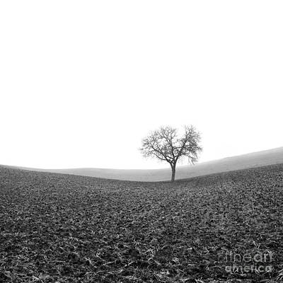 Wintry Landscape Photograph - Solitary Tree In Winter. Auvergne. France by Bernard Jaubert