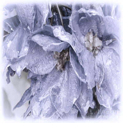 Blossoms Photograph - Solomons Proverbs by Jean OKeeffe Macro Abundance Art