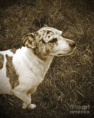 Blue Healer Photograph - Something In The Air by Adri Turner