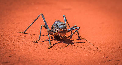 Biting Photograph - Something To Bug You - Armored Katydid Photograph by Duane Miller