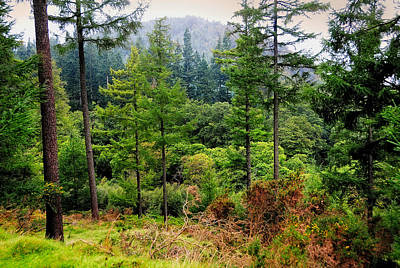 Somewhere In The Forest Over Upper Lake. Glendalough. Ireland Print by Jenny Rainbow