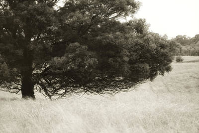 Weiss Photograph - Somewhere To Dream by Amy Weiss