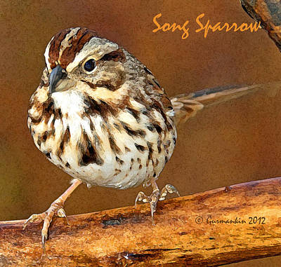 Print featuring the photograph Song Sparrow On Tree Branch by A Gurmankin