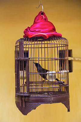 Bird Cages Photograph - Songbird In Cage, Hanoi, Vietnam by Peter Adams