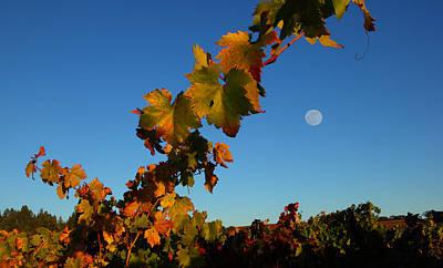 Vineyard Photograph - Sonoma Moon by Susan Rovira