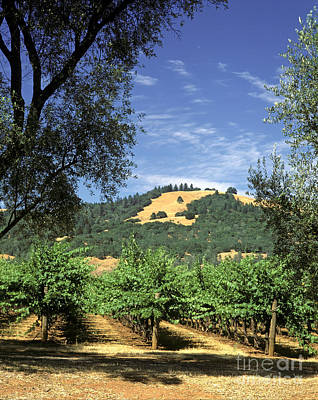 Sonoma Valley Vineyard Print by Craig Lovell