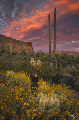 Barrel Cactus Photograph - Sonoran Romance by Peter Coskun