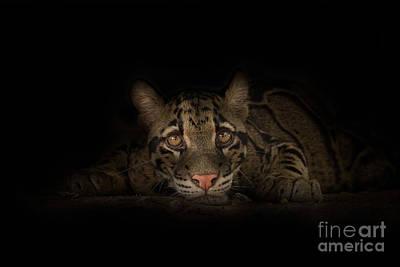 Clouded Leopard Photograph - Soul Connection by Ashley Vincent
