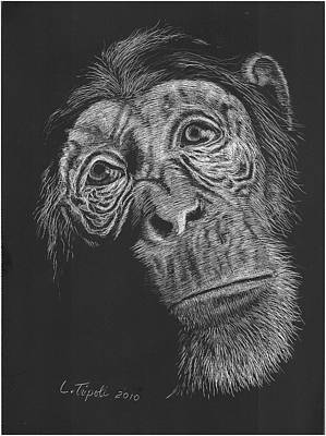 Chimpanzee Drawing - Soulful by Lawrence Tripoli