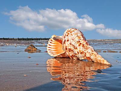 Sounds Of The Ocean - Trumpet Triton Seashell Print by Gill Billington