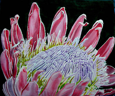 South African Flower Protea Painting Print by Sylvie Heasman