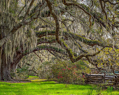 Southern Charm Print by Steve DuPree