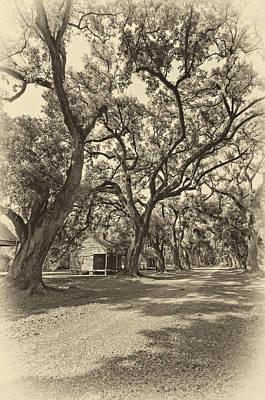 Southern Lane Sepia Print by Steve Harrington