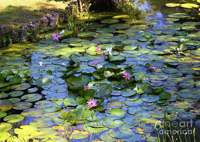 Lilies Photograph - Southern Lily Pond by Carol Groenen