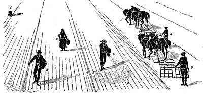 Sowing And Harrowing Corn Print by Universal History Archive/uig