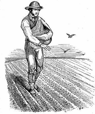 Sowing Seed Broadcast Print by Universal History Archive/uig