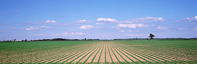 Repetition Photograph - Soybean Field In A Landscape, Marion by Panoramic Images