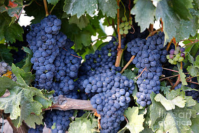 Spanish Grapes Print by Carol Groenen
