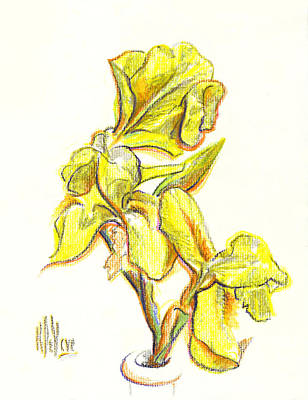 Irises Drawing - Spanish Irises by Kip DeVore