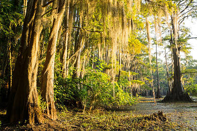 Texas Photograph - Spanish Moss In The Morning Sun by Ellie Teramoto