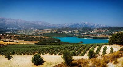 Spanish Landscape Photograph - Spanish Tree Farm by Mountain Dreams