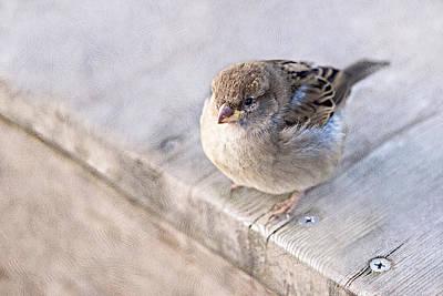 Sparrow - Takeoff Problems Print by Alexander Senin