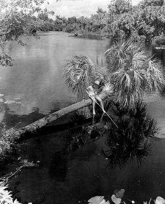 Lilly Pads Photograph - Special Fishing Spot by Retro Images Archive