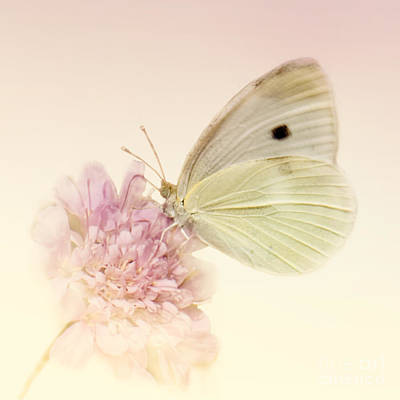 Cabbage White Butterfly Photograph - Spellbinder by Betty LaRue