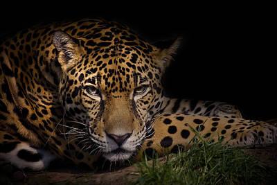 Leopards Photograph - Spender by Cheri McEachin
