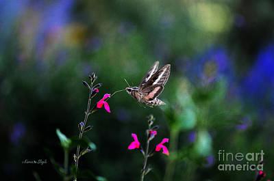 Sphinx Moth And Summer Flowers Print by Karen Slagle