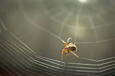 Spider Building His Web Print by Danielle Anderson