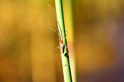 Spider Legs Mixed Media - Spider In The Reeds  by Toppart Sweden