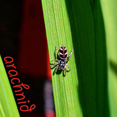 Spider On Green Leaf Print by Toppart Sweden
