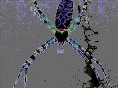 Spider Spider On The Wall Print by Rebecca Flaig