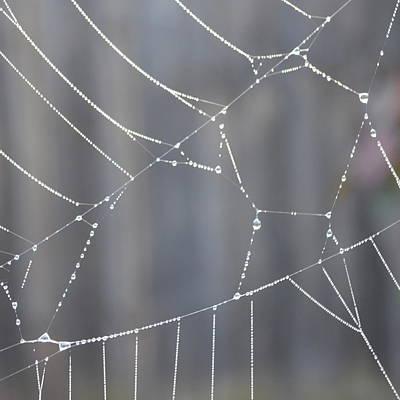 Spider Web In Rain Print by Cheryl Miller