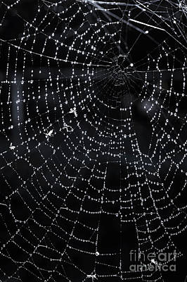 Arachnid Photograph - Spiderweb by Elena Elisseeva