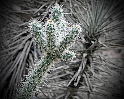 Claremont Photograph - Spiky by Charlette Miller
