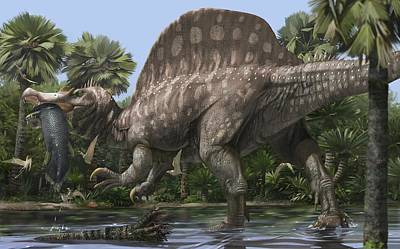 Spinosaurus, Artwork Print by Science Photo Library