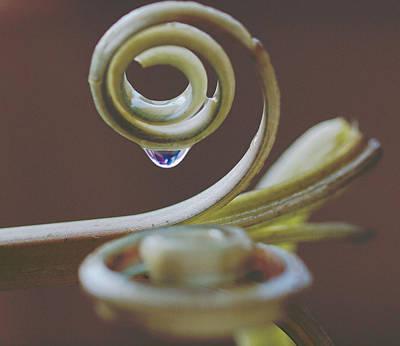 Spirals Print by Annette Hugen