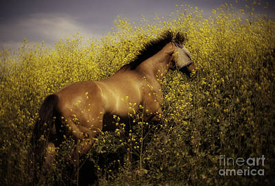 Horses Photograph - Spirit by Jacque The Muse Photography