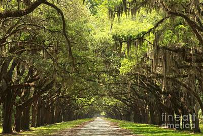 Georgia Plantation Photograph - Splendid Oak Drive by Adam Jewell