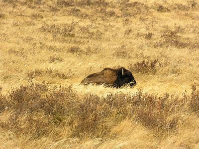 Autumn Photograph - Splendor In The Grass by David Mortenson