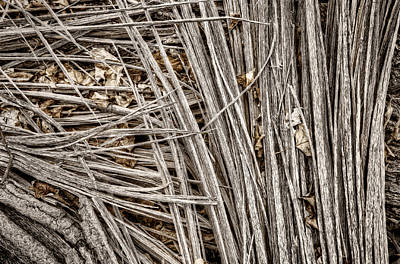 Abstract Photograph - Splinters by Scott Norris