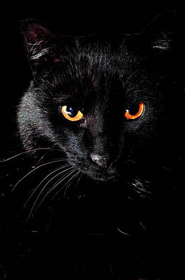 Cat Photograph - Spooks Black Cat by Laura Strain