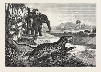 Cheetah Drawing - Sport In India, Hunting Antelopes With The Cheetah by English School